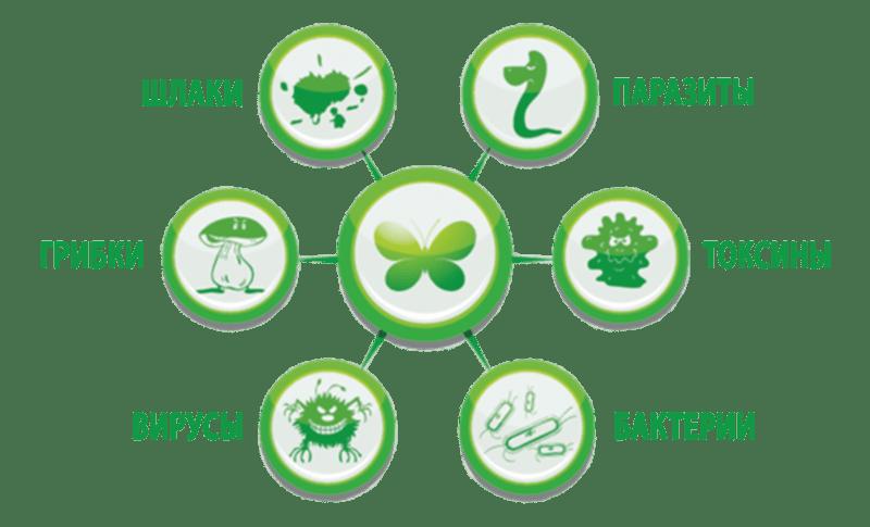 народные травы от паразитов в организме человека